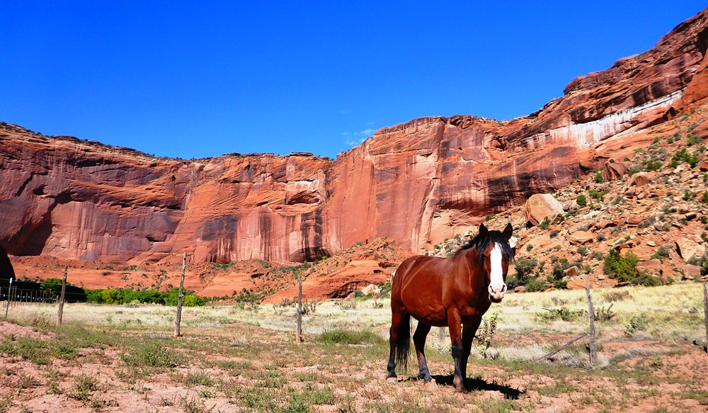Wild horse in Canyon de Chelly