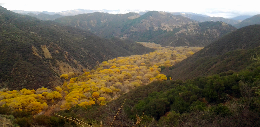 The Santa Ynez River Valley with autumn trees