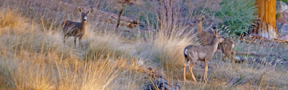Chris Tarzan Clemens - Deer Mission Pines